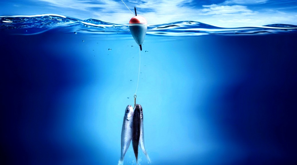 fish-wallpaper-hd-1038x576